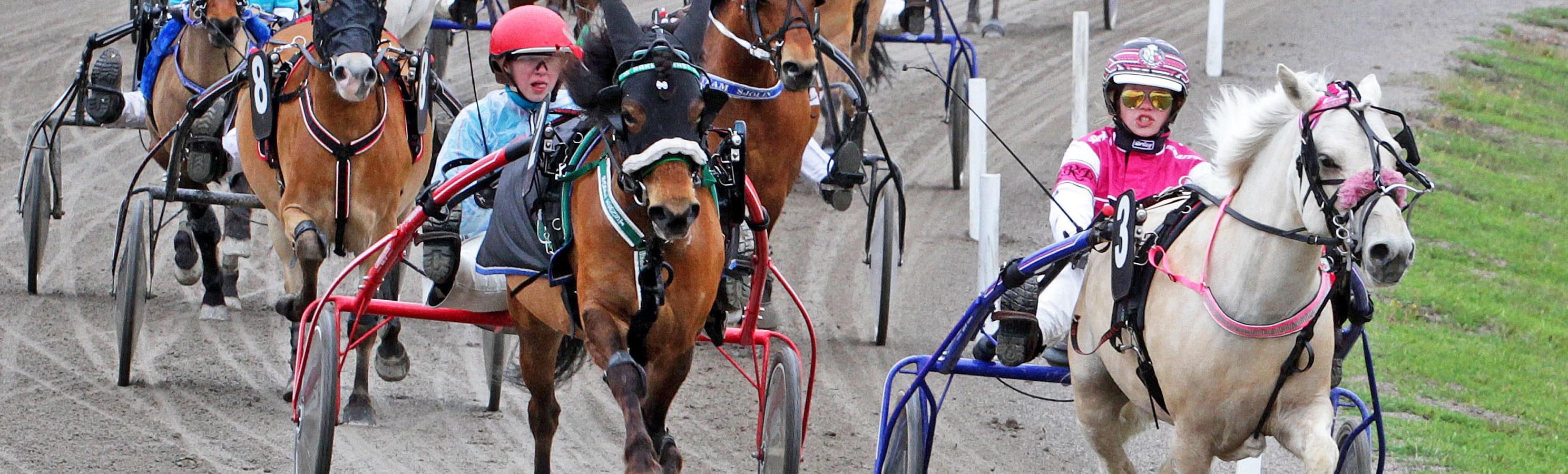Ponnytravtävling utan häst
